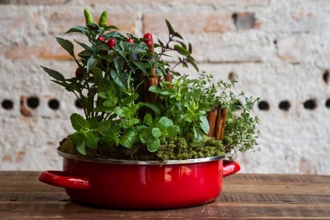 Your Garden is a Medicine Cabinet